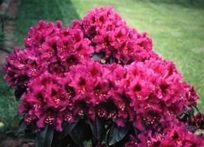 Spring Flowering Bushes - shrubs by flowering season and height