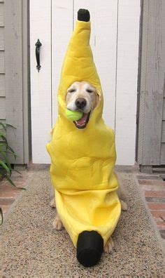 golden retriever costume for humans 1000 ideas about puppy costume on costumes puppies and puppy clothes