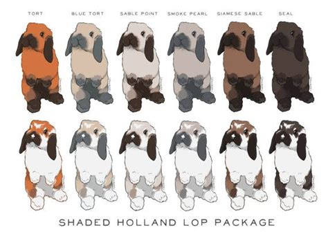 template packaging lop best 25 holland lop ideas on pinterest