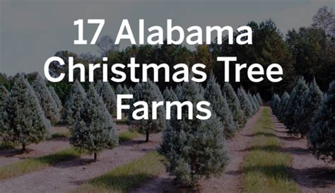 christmas tree farms birmingham al 17 alabama tree farms worth a visit this season al