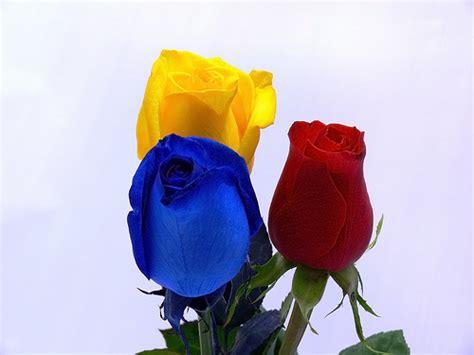 imagenes de rosas tricolor webquest creator 2