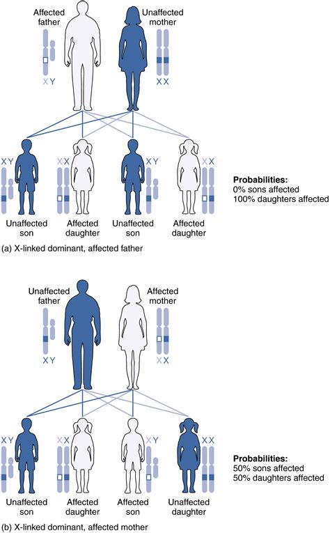 pattern component chromosome theory inheritance patterns of inheritance voer