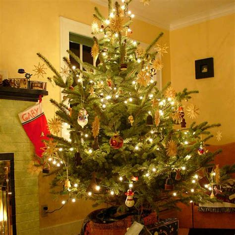 live decorated trees how to care for your living tree hgtv