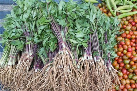 levistico in cucina conoscere le erbe aromatiche il levistico agrodolce