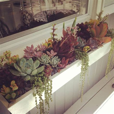 succulent window box 25 best ideas about window box planter on