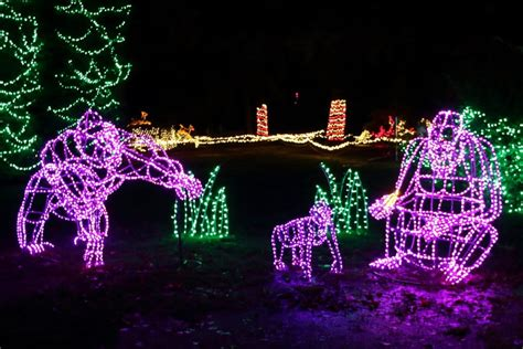 zoo light seattle woodland park zoo lights decoratingspecial