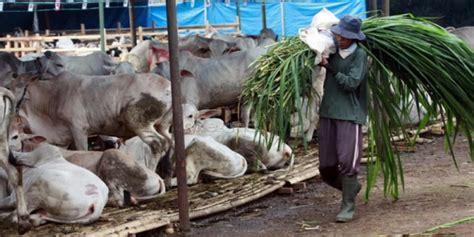 Bibit Sapi Jawa Barat kebutuhan sapi kurban di jawa barat diprediksi aman