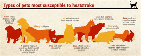 pug excessive drooling summer sun and heatstroke by dr lizinda spies animaland