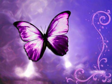 imagenes de mariposas bonitas y fondos de pantalla de hermosas im 225 genes de mariposas