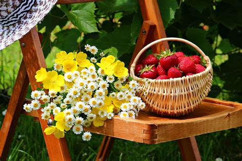 flowers and fruits from the wilderness or thirty six years in and two winters in honduras classic reprint books basket flowers table fruits strawberries garden