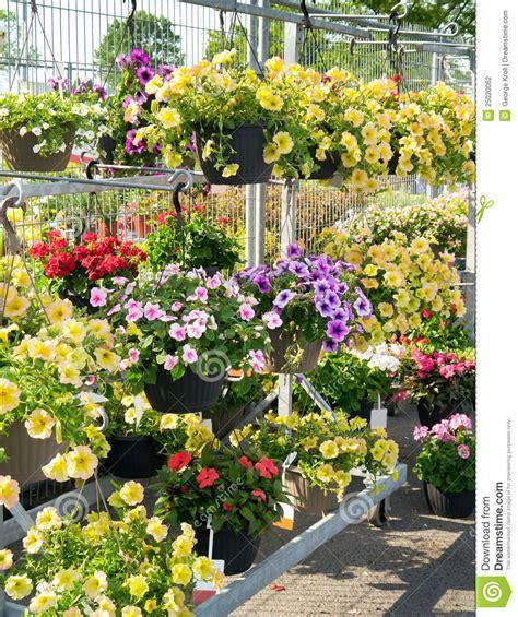 Garden Center Flowers Flowers In Garden Center Stock Photography Image 25020062
