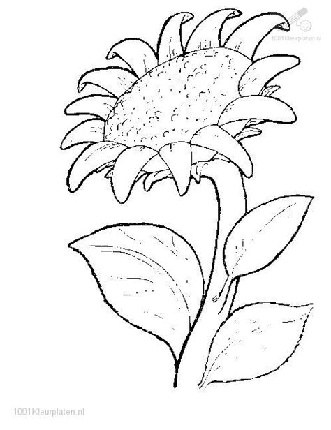 coloring pages of flowers and plants flower coloring page