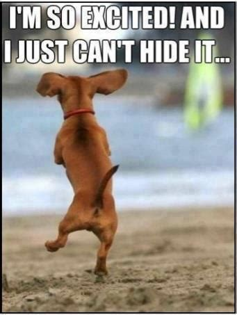 Dancing Dog Meme - funny dog and cat photos with captions motley dogs