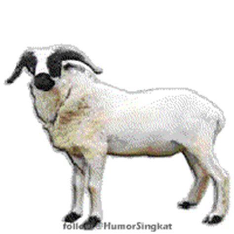 tweeps bisa nyiapin kambing buat qurban ga humor singkat lucu gambar humor kocak kata kata