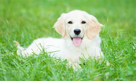 keep dogs lawn how to keep your s urine from ruining your lawn