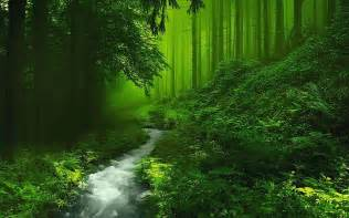beautiful forest hd image live hd wallpaper hq pictures