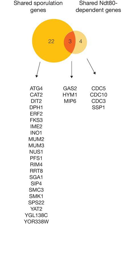 s cerevisiae supplement gene regulatory network plasticity predates a switch in