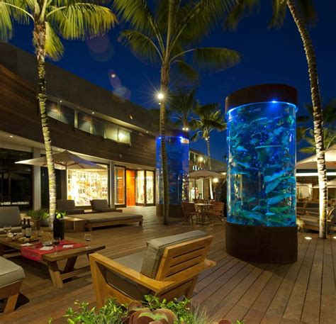 Backyard Aquarium by 84 Best Images About Fish On