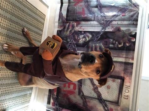 puppy pals costume ups pal costume baxterboo