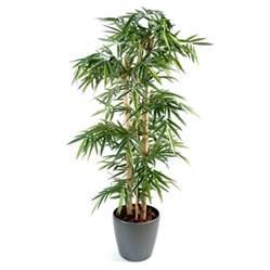 bambou grosses cannes semi naturel en pot rond