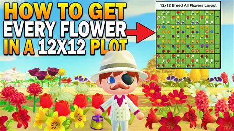 breed  hybrid flower    area datamined