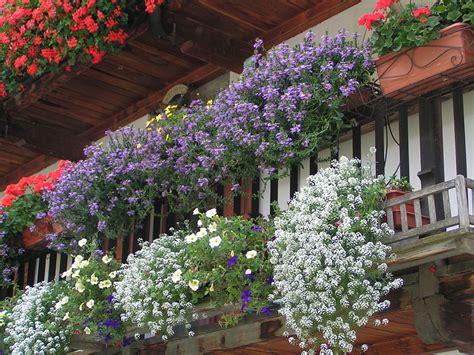 balconi fioriti in estate floricoltura mery estevez balconi fioriti gressoney