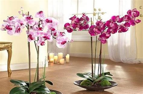how to decorate home with flowers how to decorate your home interior with orchid flowers 31