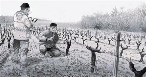 libro los ignorantes vinos y comics una mirada al mundo del vino desde la ignorancia