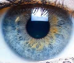 eye color distribution eye color distribution percentages statistic brain