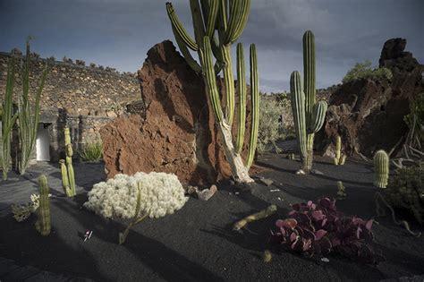 lapilli vulcanici per giardino premiato il jard 237 n de cactus 4mila piante succulente in