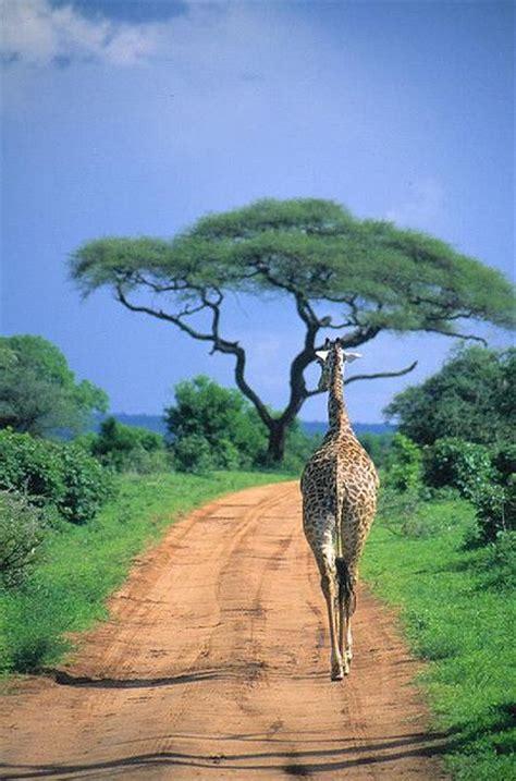 soggiorno a zanzibar tanzania soggiorno mare a zanzibar 14 giorni mugeltravel