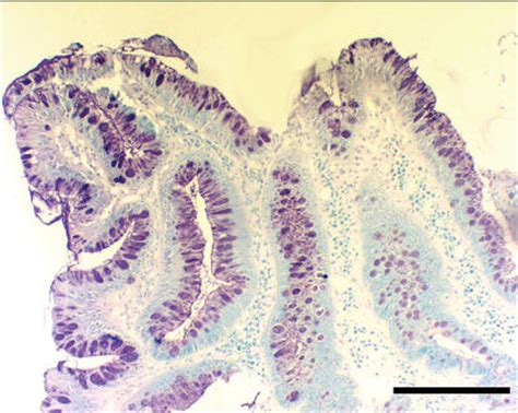 serial sections histology serial sections histology 28 images histology seventh