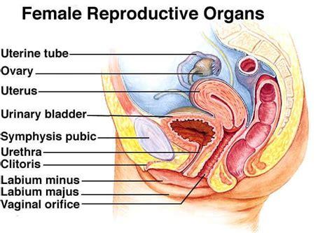 sexual diagram diseases of the sexual organ