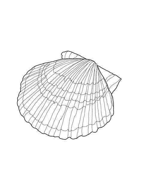 seashell color free printable seashell coloring pages for kids
