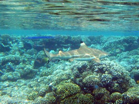 best places in the world for snorkeling best snorkeling in the world by 11 traveler writers
