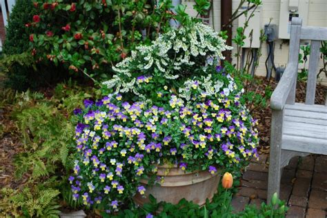 container gardening plant combinations plant combinations for containers hgtv