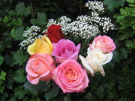 imagenes de rosas diferentes colores fotos de ramos de rosas rosas