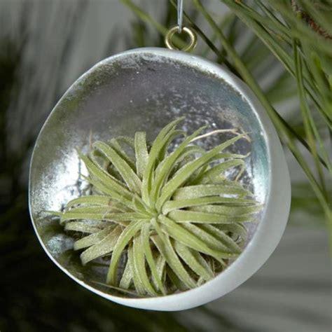 arboles de navidad vivos adornos vivos para el 225 rbol de navidad