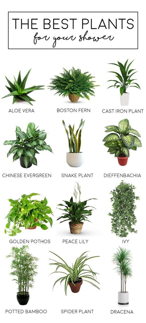 best plants for bathrooms the best bathroom plants the tao of dana