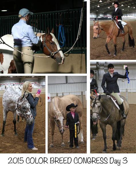 color breed congress day 3 4 photos from 2015 color breed congress equine