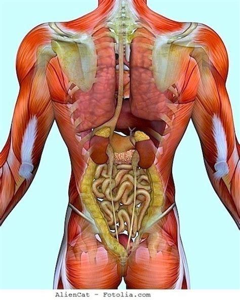 gonfiore all interno della dolore alla scapola destra o sinistra fisioterapia rubiera