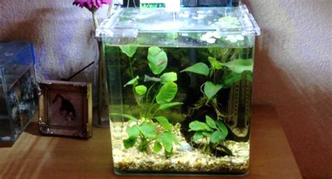 Perekat Lem Kaca Silikon Kaca Aquarium 85g Silicone cara praktis membuat aquarium mini taman air aquascape