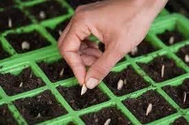 Jual Polybag Semai cara menyemai biji tanaman hias dalam pot tanaman bunga hias