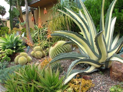 homeofficedecoration desert landscape plants