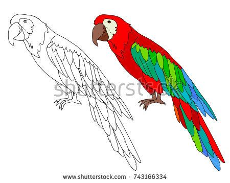parrot color drawing stock images royalty free images