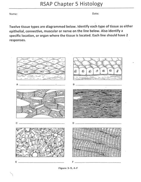 anatomy and physiology coloring workbook answers tissues pictures tissues worksheet leafsea