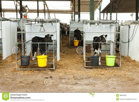 Cattle Business Plan Template – Project Initiation Documentation   Wikipedia