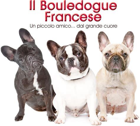 bulldog francese alimentazione il bouledogue francese
