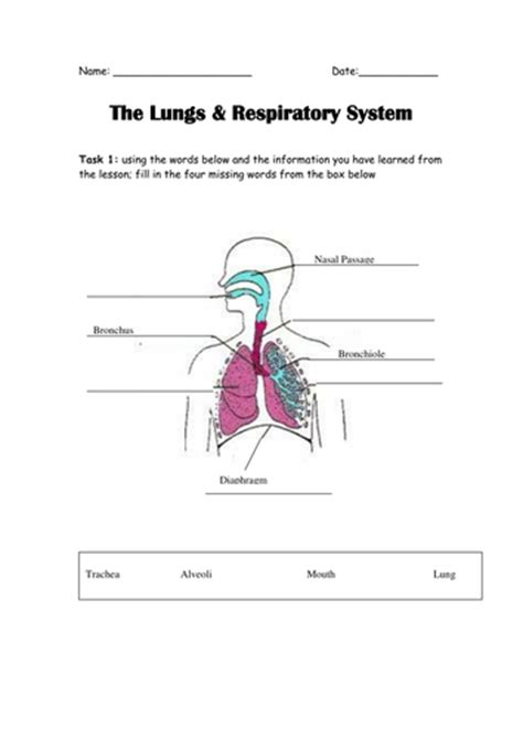 the system for part 4 doc lessons in betty neels happily after volume 4 books the lungs in the human by elasticbandy teaching