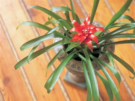 best plants for no sunlight 100 indoor plants no sun 10 indoor plants that you